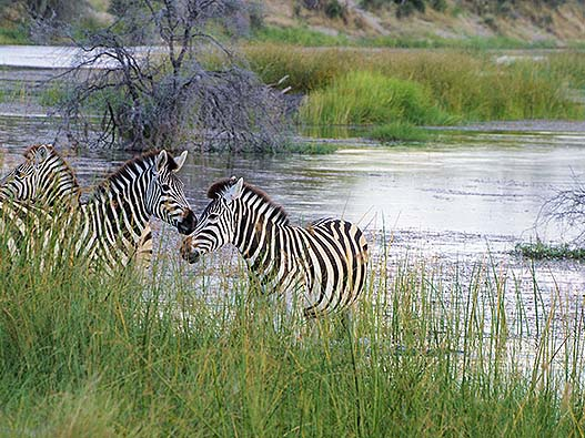 best_of_botswana_05