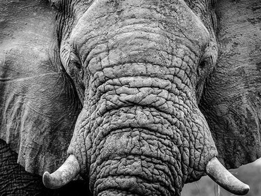 botswana_safari_02