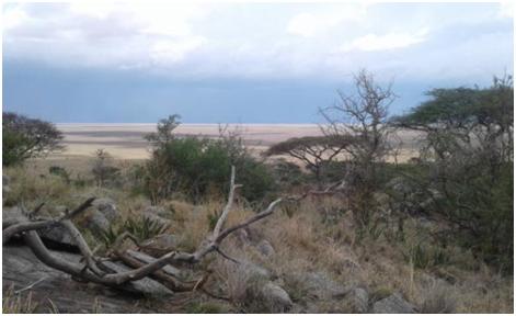 Tanzania-Tarangire National Park